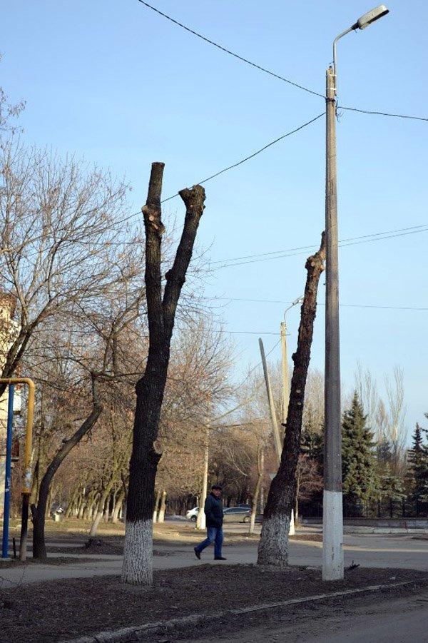 В Горловке власти начали работать над имиджем города: кронируют целые улицы, фото-7