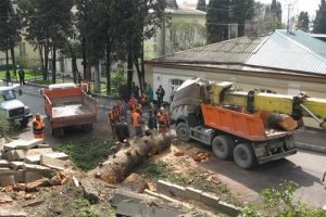 В Феодосии сильный ветер валил деревья, фото-1