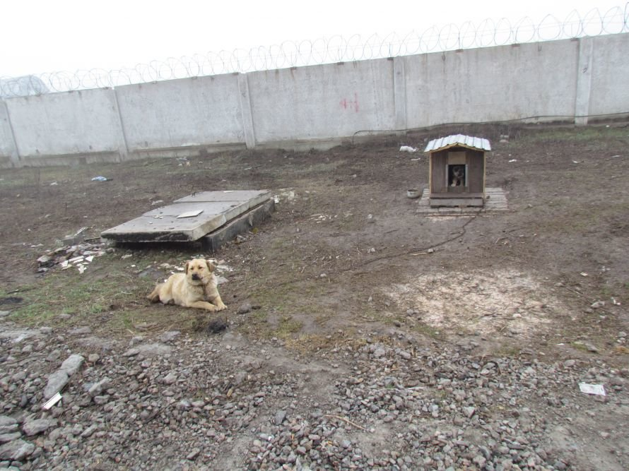 """В Мариуполе наконец-то закончат строительство подстанции """"Город-11 110/6 кВ, фото-8"""