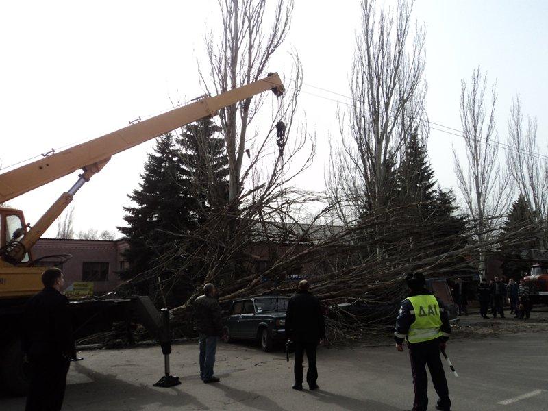 В Донецкой области одним деревом привалило сразу две машины (фото), фото-2