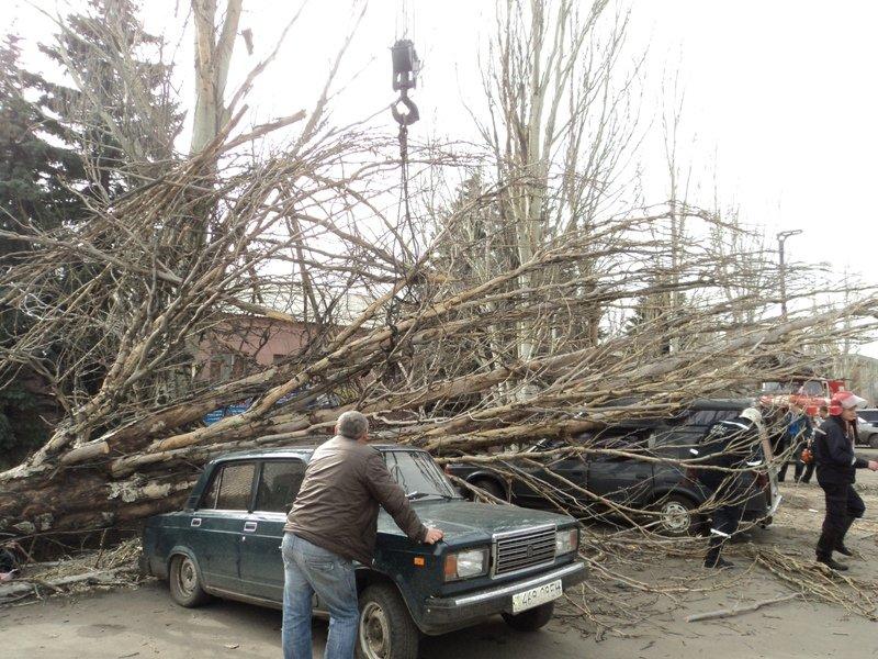 В Донецкой области одним деревом привалило сразу две машины (фото), фото-1