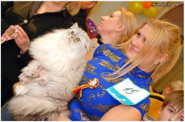 У жителей Кривого Рога есть уникальная возможность продемонстрировать своих котэ (ФОТО), фото-11