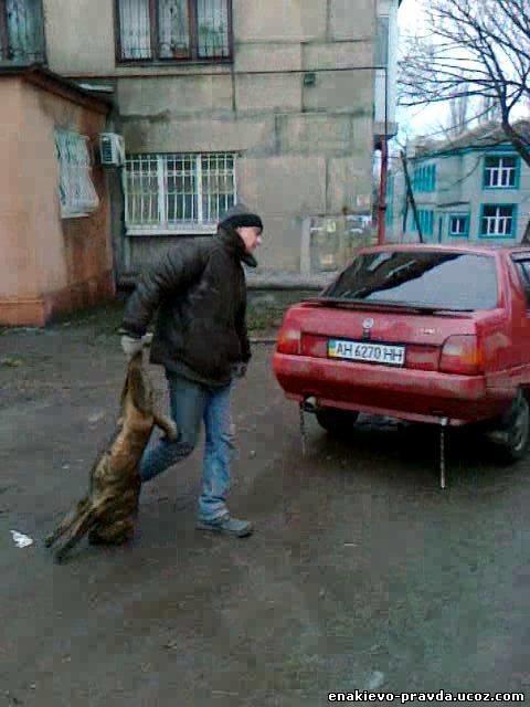 Лицензия на убийство. В Енакиево садисты убили собак, фото-1