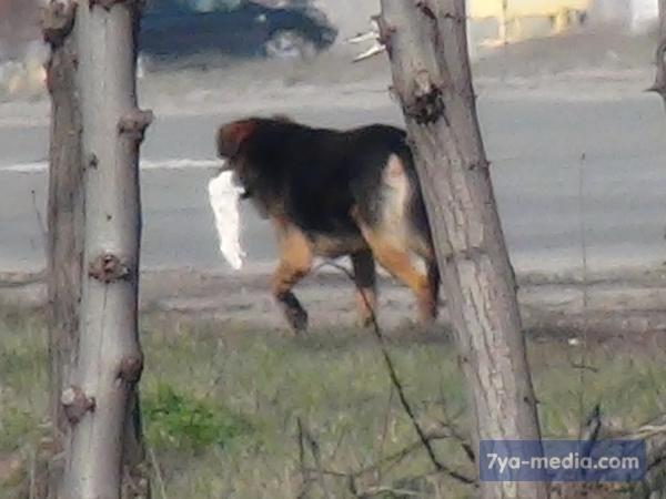 Горловка не далека от беды: в Мариуполе собаки растерзали женщину, фото-7