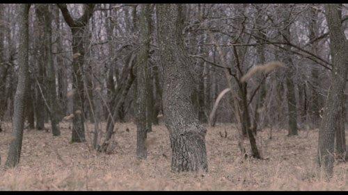 Донетчане снимут фильм ужасов «Отшельник» в окрестностях Славянска, фото-1