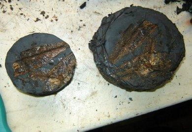 Ученые Днепропетровской области нашли останки рыб, которым... 40 миллионов лет, фото-1