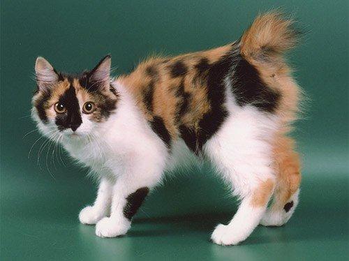 Не пропустите выставку редких пород кошек в Кировограде!, фото-1