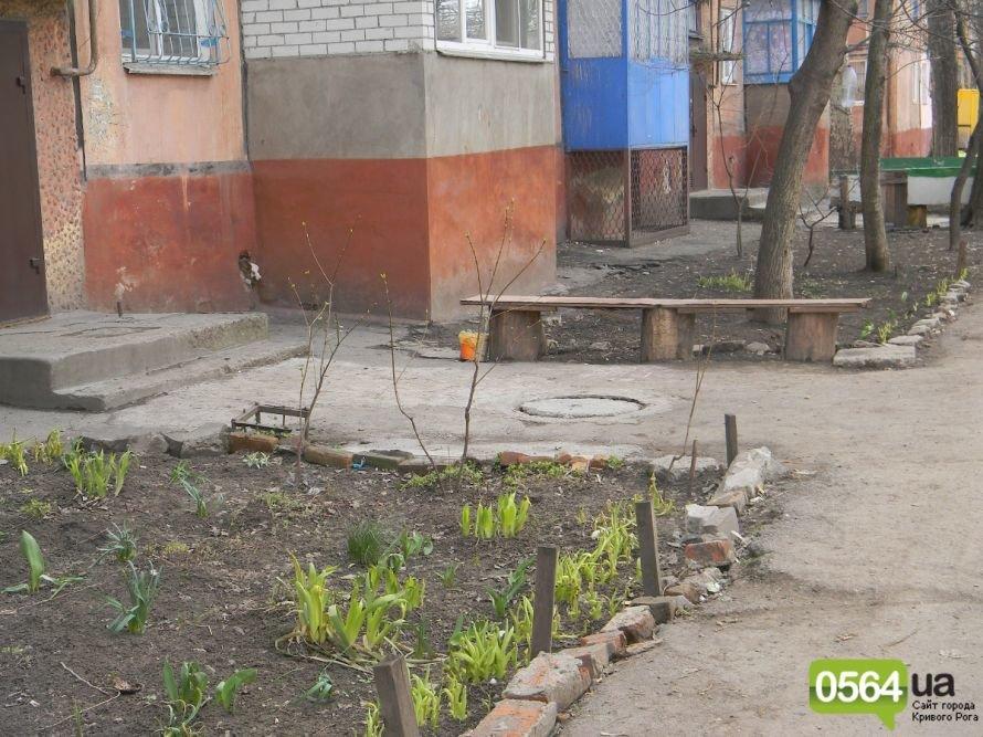 Жители Кривого Рога вышли на уборку придомовых территорий. На ЖЭК никто не надеется (ФОТОРЕПОРТАЖ), фото-5