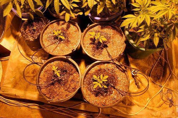 Дончанин построил в заброшенном доме, оборудованную по последнему слову техники оранжерею для выращивания конопли (фото), фото-3