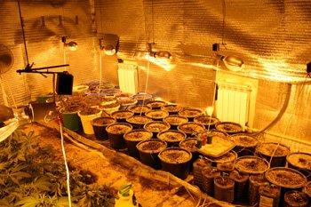 Дончанин построил в заброшенном доме, оборудованную по последнему слову техники оранжерею для выращивания конопли (фото), фото-1
