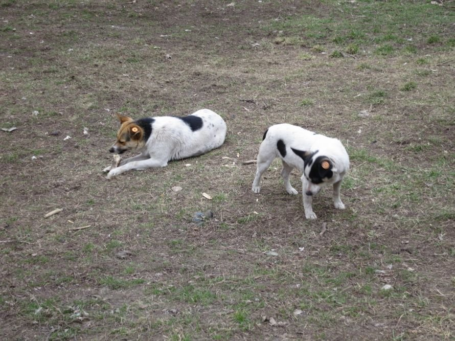 собаки 3