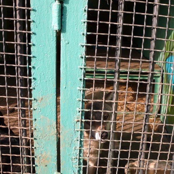 В луганском зооуголке необычная «любовь», пополнение и… крысы (ФОТО), фото-3