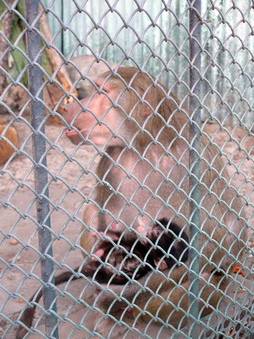 В луганском зооуголке необычная «любовь», пополнение и… крысы (ФОТО), фото-2
