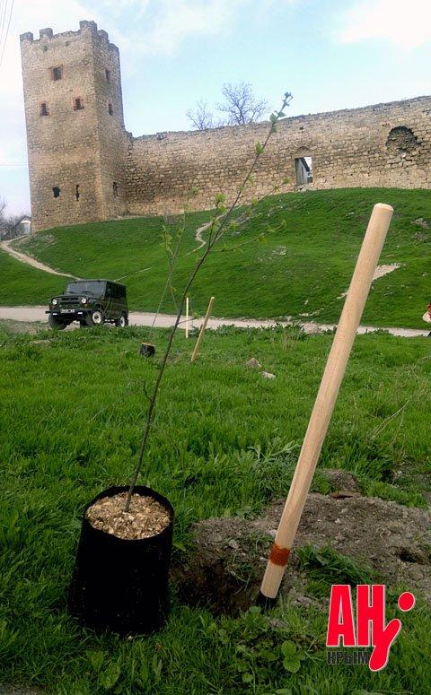 Мэр Феодосии на субботнике сажал и пилил деревья, фото-2