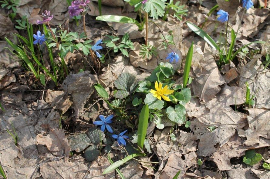 ФОТОФАКТ: в Часовоярский лес пришла весна, фото-1