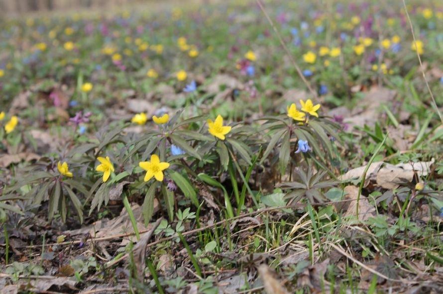 ФОТОФАКТ: в Часовоярский лес пришла весна, фото-4