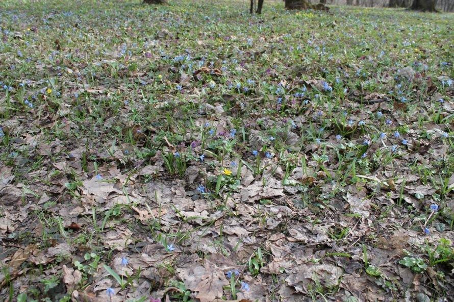 ФОТОФАКТ: в Часовоярский лес пришла весна, фото-2