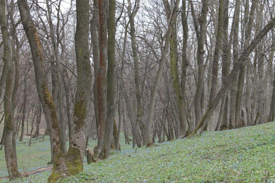 ФОТОФАКТ: в Часовоярский лес пришла весна, фото-5