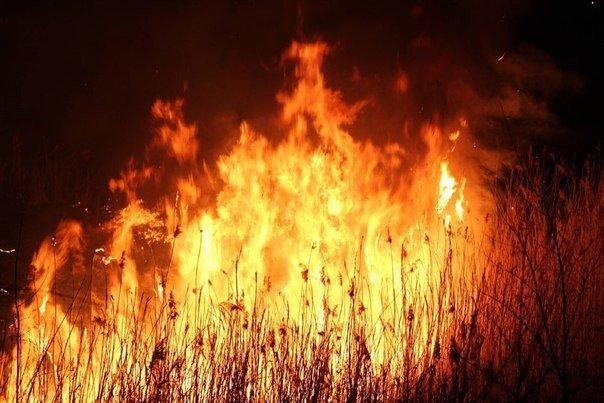 На берегу Луганки загорелся камыш: было много зрителей и даже пожарные (ФОТО), фото-1