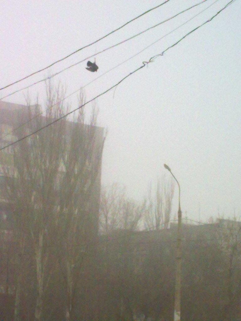 Вместе легче и... Мариупольцы спасли голубя из плена электропроводов  (ФОТО), фото-1