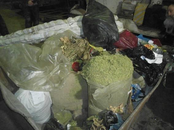 В топку: в Донецкой области спалили 400 кустов конопли, 30 кг каннабиса и другие наркотики, признанные вещдоками (фото), фото-1