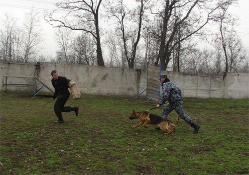 На Кировоградщине дошкольники посетили Кинологический центр (ФОТО) (фото) - фото 3