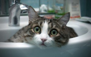 funny_cats_6-300x187