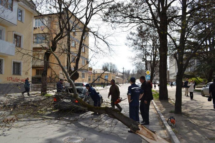 Перед симферопольской мэрией дерево придавило BMW (ФОТО), фото-1