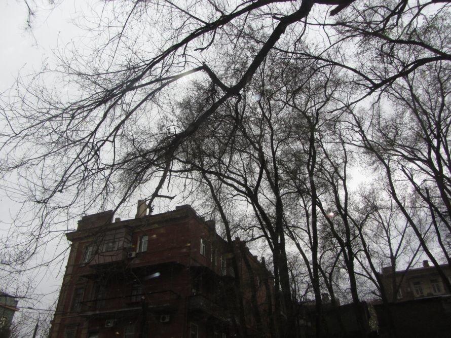Субботник закончился, проблемы остались. Сухие деревья угрожают здоровью днепропетровцев (ФОТОФАКТ), фото-1