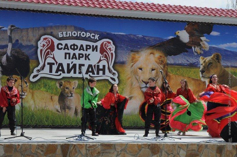 львы 168