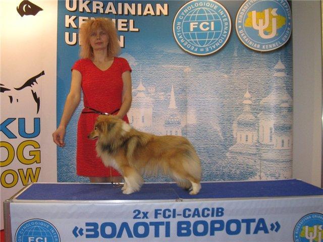 Шелти и цвергшнауцер из Мариуполя стали «Юными чемпионами Украины» (ФОТО), фото-1