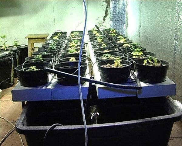 В Донецкой области продвинутый наркоаграрий научился в своей «оранжерее» выращивать коноплю без почвы (фото), фото-1