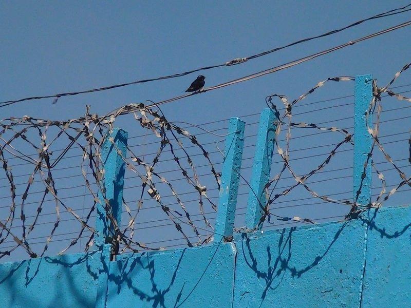 В Мариупольской исправительной колонии появилась теплица (ФОТО), фото-12