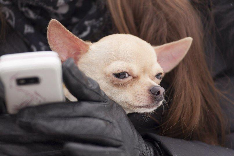 Одессит подарит iPhone тому, кто найдет его собаку (Фото) (фото) - фото 3
