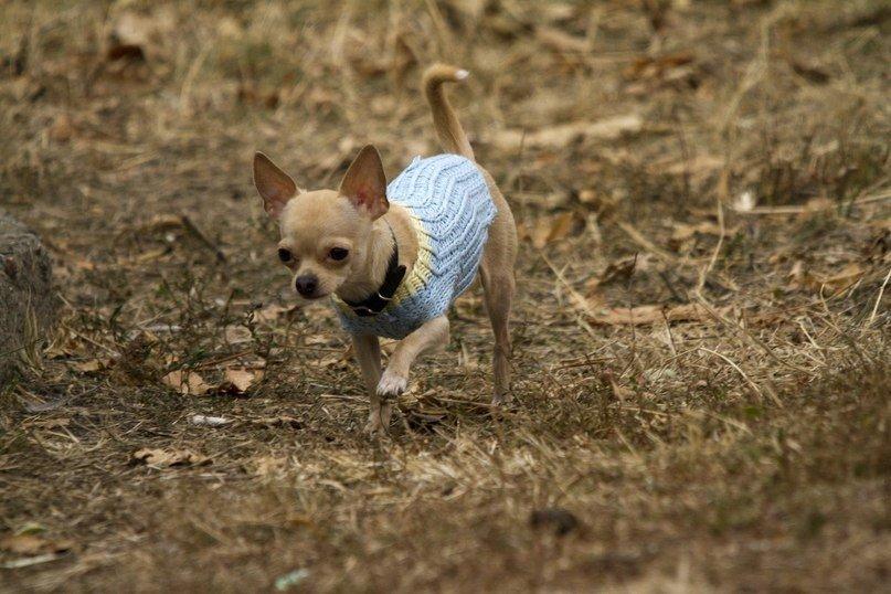 Одессит подарит iPhone тому, кто найдет его собаку (Фото) (фото) - фото 4