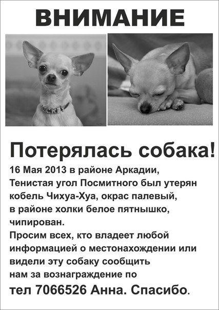 Одессит подарит iPhone тому, кто найдет его собаку (Фото) (фото) - фото 6