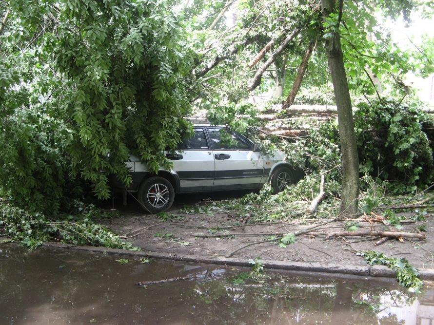 машина под деревом 001