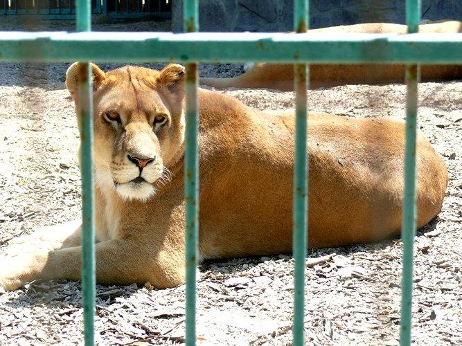 зоопарк10
