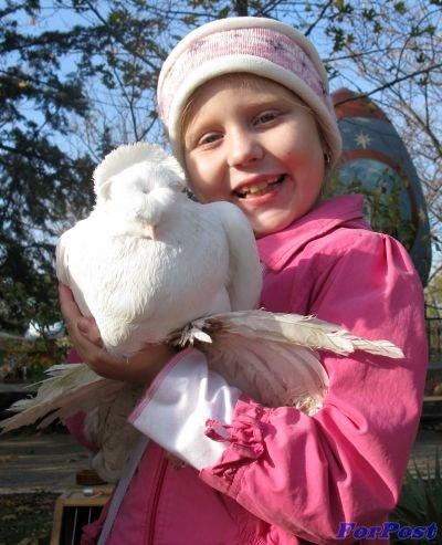 Дев-голубь