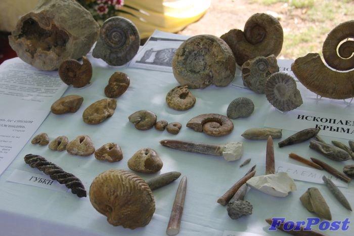 Экспонаты коллекции Пологова_ Им - миллионы лет