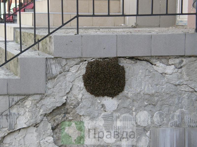 бджоли1