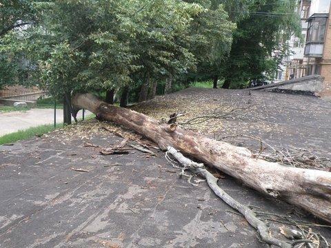 упавшее дерево2