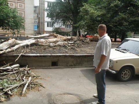 упавшее дерево1