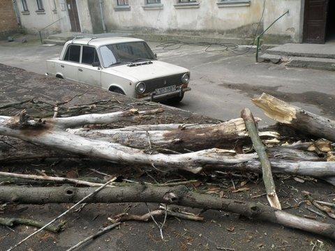 упавшее дерево3
