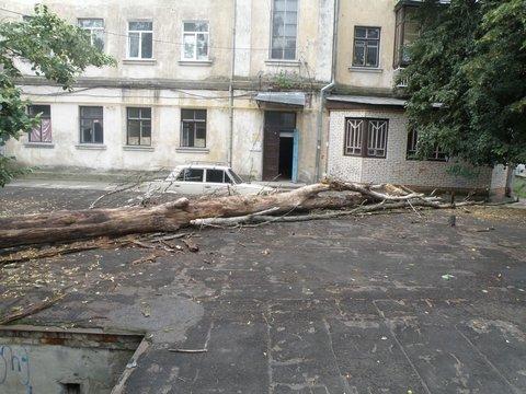 упавшее дерево5