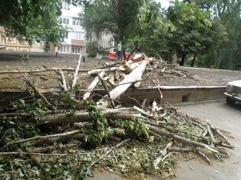 упавшее дерево6