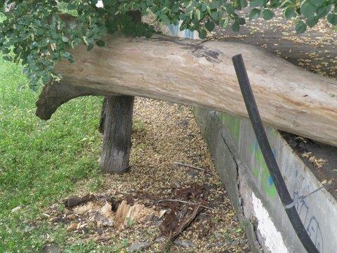 упавшее дерево4