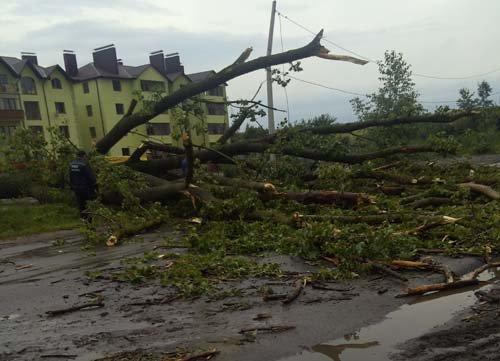 дерево привалило
