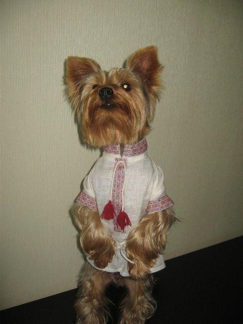 пес в вышиванке2