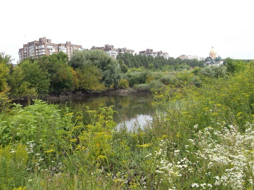 Сморід, величезна трава і … озеро – бомба повільної дії схована у Тернополі на вулиці Галицькій (фото, відео) (фото) - фото 2